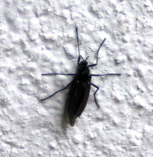 Käfer wand braune kleine an der Kleine braune