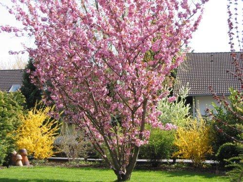 Baum Als Sichtschutz Haus Garten Forum Chefkoch De