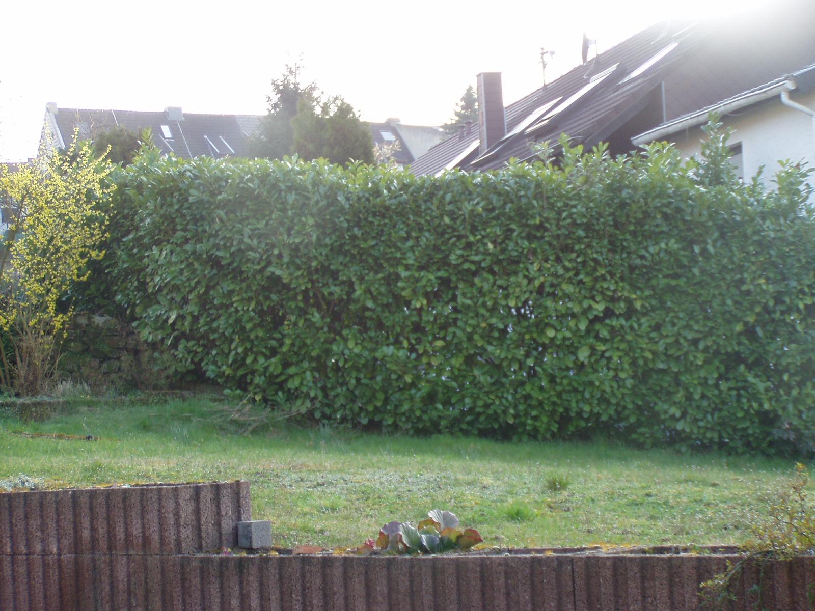 Sichtschutz Zum Nachbarn Was Ist Erlaubt Haus Garten Forum