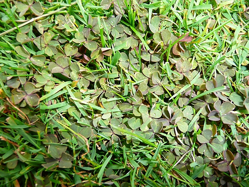 Huhugarten Und Ganz Besonders Der Rasen Wir Vom Scharzen Klee