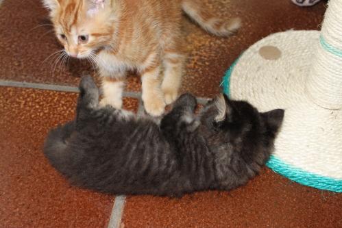 2 alt katzenbabys wochen Katzen und