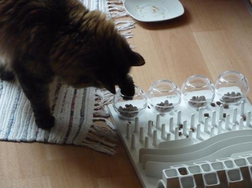Katze öffnet Alle Schieber Welcher Geruch Daran Könnte Sie Wohl