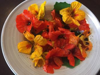 Kapuzienerkresse Salat