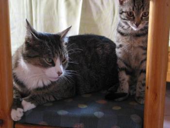 Leo und Mickey teilen alles - auch den Stuhl!