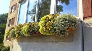 Sommerblumen außen