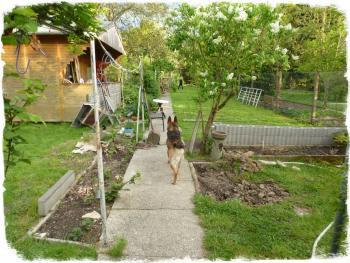 vom Haus Richtung Garten