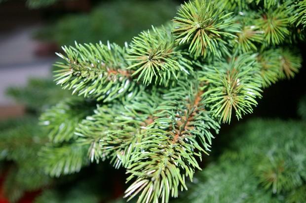 Spritzguss Weihnachtsbaum.Weihnachtsbaum Spritzguss