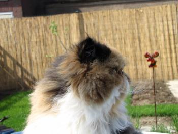Katzen im Garten