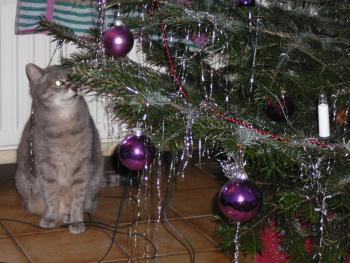full_frekjaweihnachtskatze.jpg