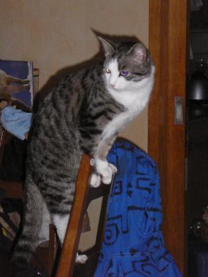 Maurice auf Stuhllehne I