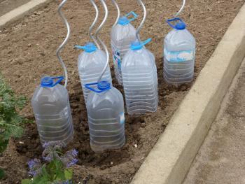 21. 3. 2016, die ersten 6 Tomaten sind gepflanzt und haben ein schützendes Haus mit Flaschen bekommen