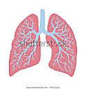 Asthma, chron. Bronchitis, COPD & Co.