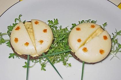 Lustige Käse-Käfer 41