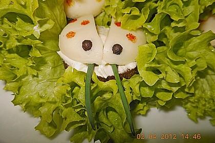 Lustige Käse-Käfer 40