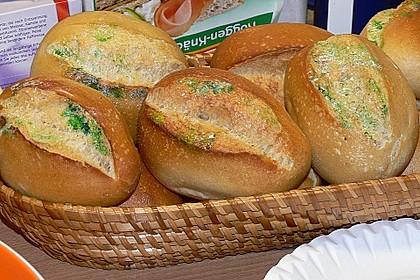 Schimmeliges Brot 11