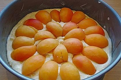 Marillenkuchen mit Vanillehäubchen 7