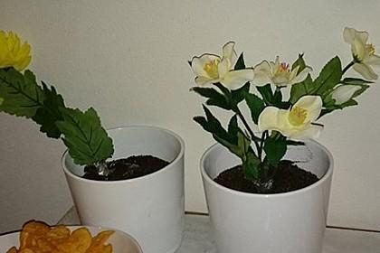 Blumenerde 53