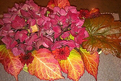Blumenerde 59