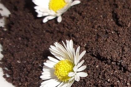 Blumenerde 31