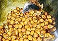 Geröstete Snack - Kichererbsen