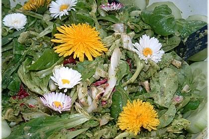 Wildkräutersalat für die Frühjahrskur 1