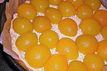 Aprikosen - Mandel - Kuchen 12
