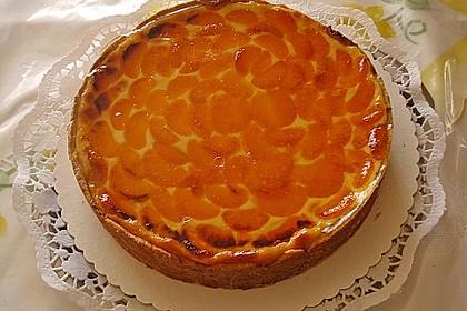 Schmand - Pudding - Mandarinen - Torte 15