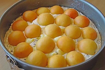 Ameisen-Marillenkuchen mit Puddingfüllung 46