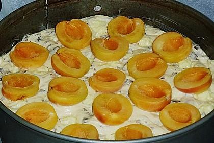 Ameisen-Marillenkuchen mit Puddingfüllung 76