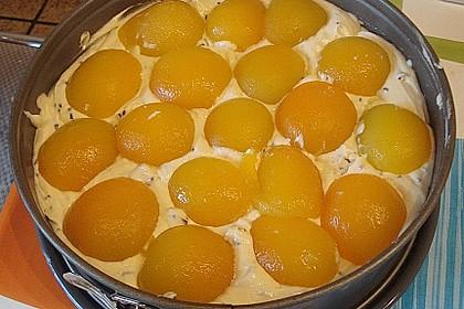 Ameisen-Marillenkuchen mit Puddingfüllung 71