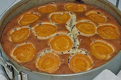 Ameisen-Marillenkuchen mit Puddingfüllung 65