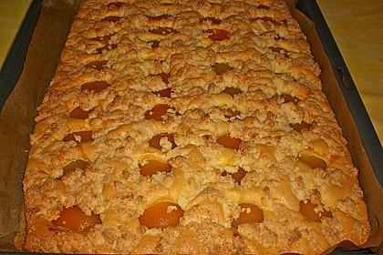 Marillenkuchen mit Kokosstreusel 11