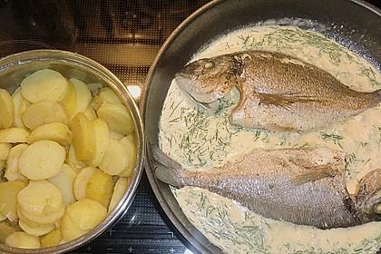 Doraden in Dillsauce mit Kartoffelscheiben 1