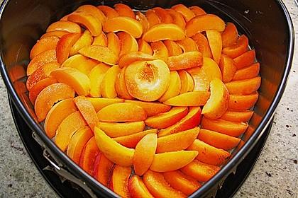 Waldviertler Marillenkuchen (Aprikosenkuchen) 17