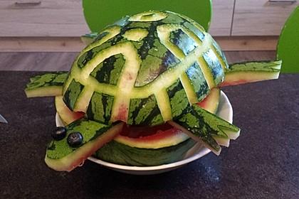 Melonen-Schildkröte (Bild)