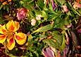 Blütensalat mit Wildkräutern und Cashewdressing