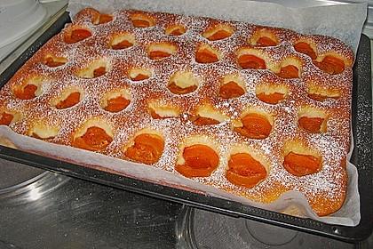 Marillenkuchen 4