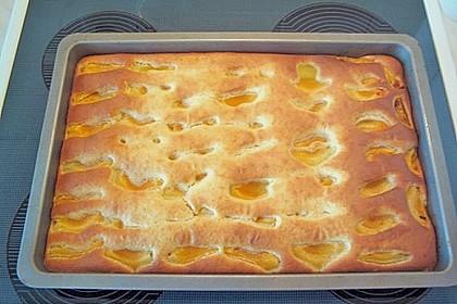 Aprikosen Schnellkuchen (Bild)