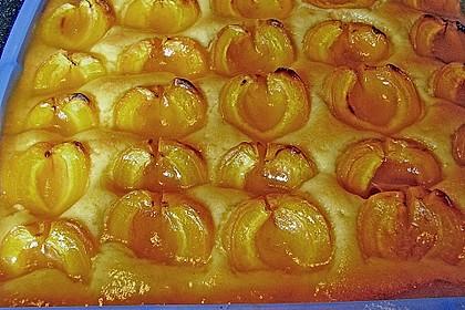 Marillenkuchen 5
