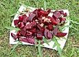 Rote Bete - Rucola - Salat mit Meerrettich