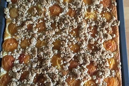 Marillenkuchen mit Joghurtboden und Mandelstreuseln