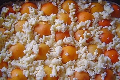 Marillen (Aprikosen) - Rahmkuchen mit feinen Streuseln 35