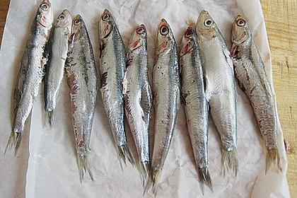 Sardinen auf Blattsalat 3