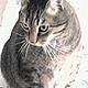 Profilbild von kratzetatze