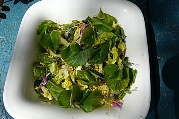 Frühlings-Salat mit Blättern und Blüten